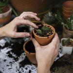 gardening for health