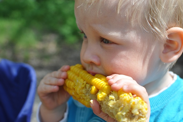Close up of a blinde haired child about age 2 eating a corn on the cop - indicating children being raised as vegetarians