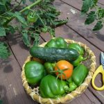 grow healthy organic produce