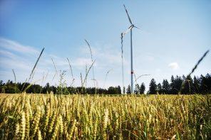 Cornfield with a wind turbine and a beautiful blue sky