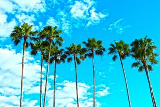 7 tall palm trees set against a bright blue sky with white fluffy clouds