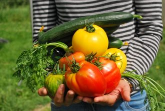 Close up of a person holding home grown vegetables including yellow and red tomatoes, a cucumber and carrots.