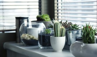 selection of cactus and other succulent pot plants on a kitchen surface by a wndow with the blinds down.