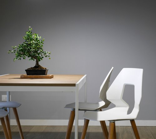 Table and two white wooden chairs that are representing eco friendly living. There is a bonsai tree on the table.