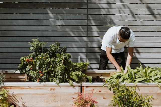 tips for starting a vegetable garden